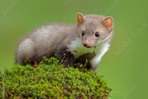 Foto  Szene der wild lebenden Tiere, Frankreich