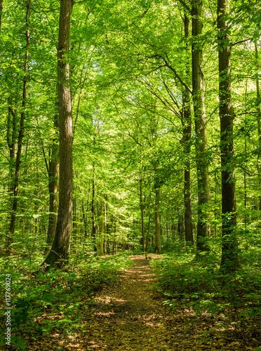 Deurstickers Weg in bos Wald Pfad Bäume Sommerzeit