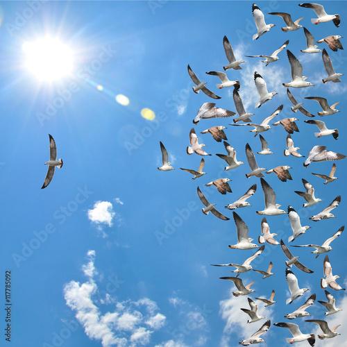 Photo  flying seagull birds