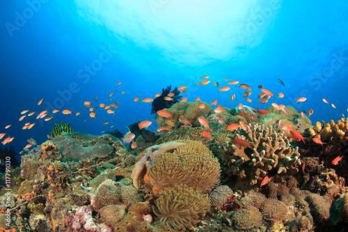 Staande foto Koraalriffen Coral reef underwater sea ocean