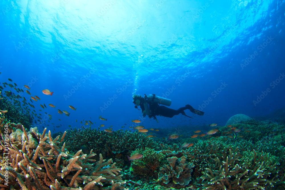 Fototapeta Scuba dive. Coral reef underwater and female scuba diver