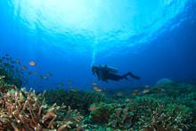 Scuba Dive. Coral Reef Underwater And Female Scuba Diver