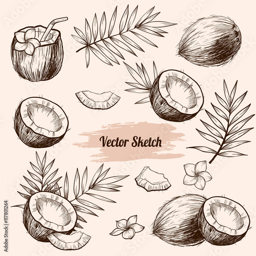 Slika na platnu Vector coconut hand drawn sketch with palm leaf