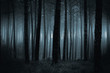 canvas print picture - Dark foggy forest