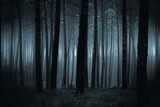 Dark foggy forest