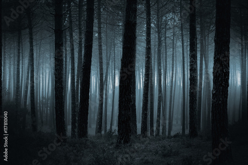Poster Bossen Dark foggy forest