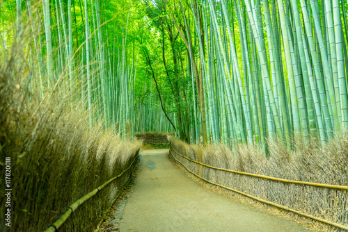 Spoed Foto op Canvas Bamboo Beautiful Bamboo forest in Arashiyama at Kyoto