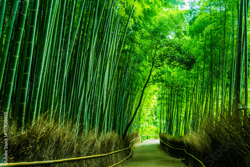 In de dag Bamboe The Arashiyama Bamboo Grove of Kyoto, Japan.