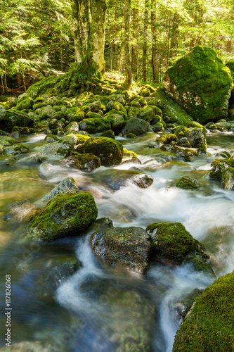 Fototapeten Forest river torrente