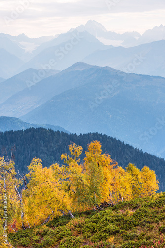 Foto op Canvas Herfst Autumn Landscape with birch forest in the mountains of Georgia