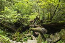 Moss Growing In Big Fallen Tree. Tree Trunk With Moss. Landscape