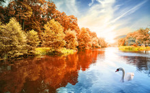River With Autumn Forest And S...