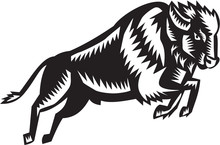 American Bison Buffalo Jumping...