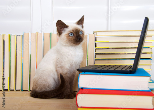 Fotografía  Siamese kitten with blue eyes sitting at a miniature laptop computer stacked on books with books in background