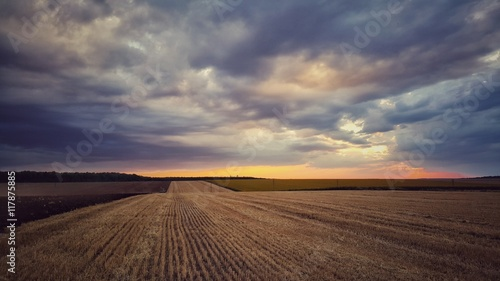Obraz Dramatic cloudscape over wheat field, agriculture concept - fototapety do salonu