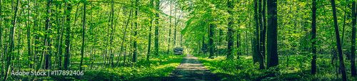 Fotobehang Bossen Panorama landscape with a road passing through a green forest