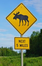 A Yellow Moose Crossing Sign In Alaska