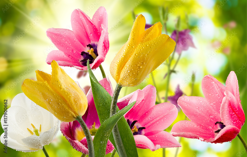 Fototapety, obrazy: image of beautiful flowers in the garden closeup