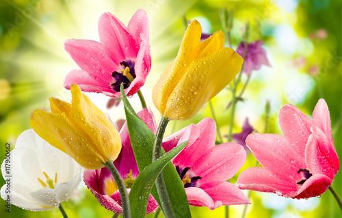 Obraz Obraz pięknych kwiatów w ogrodzie - fototapety do salonu