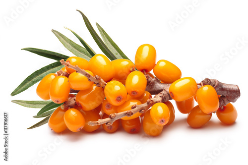 Branch of sea buckthorn berries, clipping paths