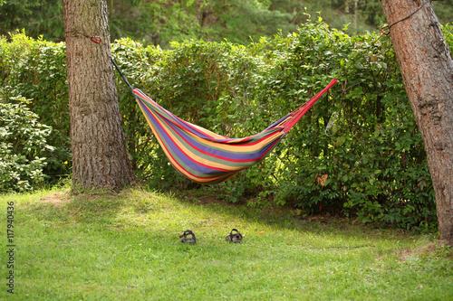 Fototapeta hamak na działce między drzewami obraz