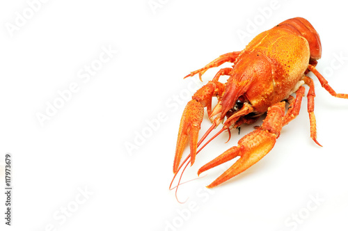 Poster Coquillage Boiled crayfish on white background isolated