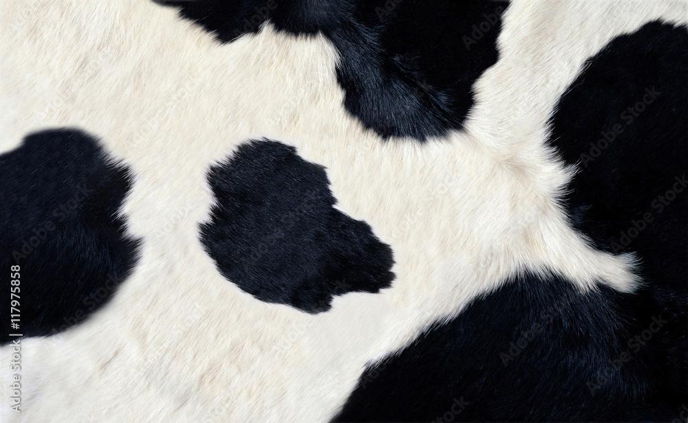 Fototapeta real black and white cow hide