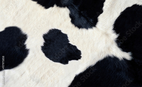 Acrylic Prints Cow real black and white cow hide