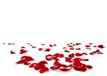 Red Rose Petals Scattered On T...