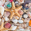 Shells and starfish on sandy beach. Summer background. Summer co
