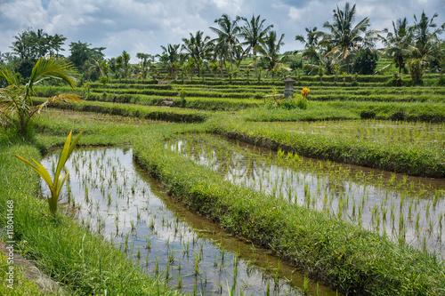 Tuinposter Bali Rizières de Bali