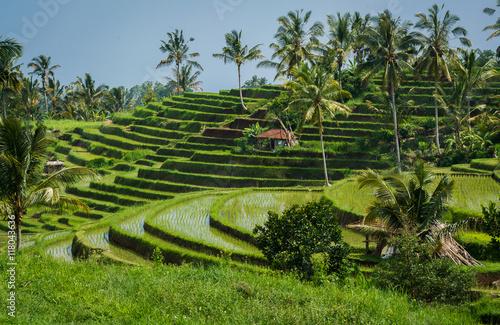Foto op Canvas Bali Rizières de Bali