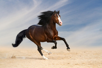 Bay horse with long mane run gallop in desert
