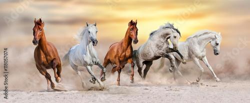 Fototapeta Horse herd run fast in desert dust against dramatic sunset sky obraz