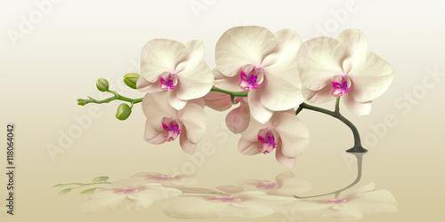 orchidea-z-odbiciem-w-panoramie