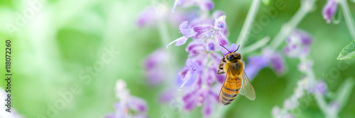 Foto op Canvas Bee Honeybee collecting pollen