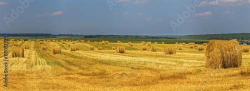 Valokuva  Summer field with straw mows at daylight panoramic shot