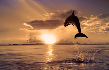 Fototapeta Delfin beautiful dolphin jumped at the sunset time