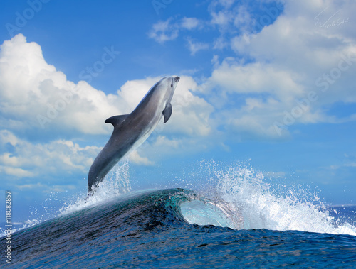 Staande foto Dolfijnen beautiful cloudy seascape in daylight and dolphin jumping out from blue curly breaking surfing wave