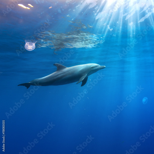 In de dag Dolfijn tropical seascape with wild dolphin swimming underwater close the sea surface between sunrays