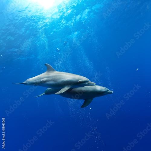 Plakat para delfinów grających w promieniach słońca pod wodą