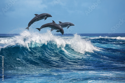 Playful dolphins jumping over breaking waves Poster