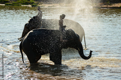 Photo  Elephant and Man hometown take a bath in river on during sunset ,Surin Thailand