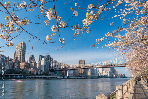 Roosevelt Island during cherry blossom in New York City Canvas Print