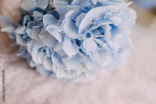 Foto  bud blue hydrangeas