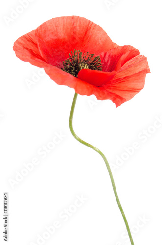 Poster Poppy single red poppy isolated on white