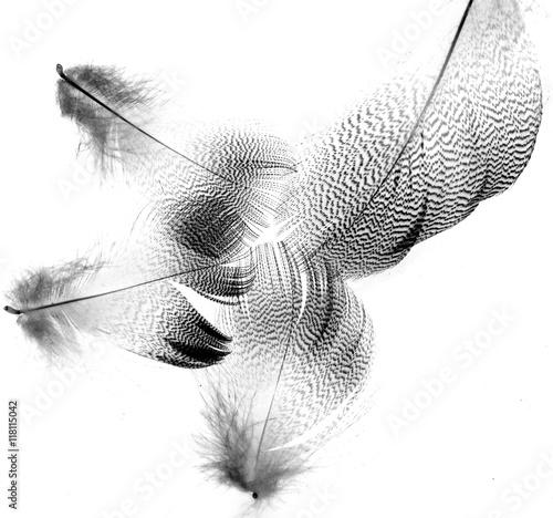 Foto-Kuscheldecke premium - black feathers on a white background (von studybos)