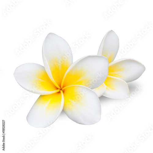 Photographie frangipani flower isolated on white background