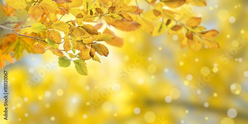 Fototapeta Nature autumn background obraz na płótnie