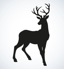Young Deer Antlered. Vector Drawing